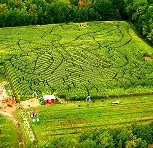Labyrinthe_Papillon_verger-labonté.jpg