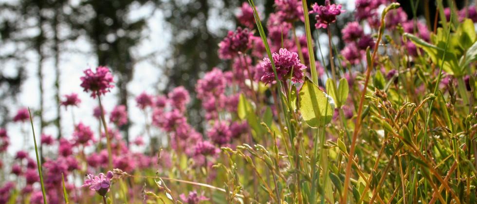 Spring wildflower meadows on hiking tour