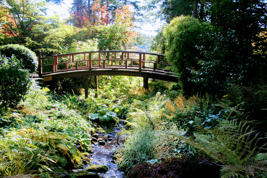 The Japanese Garden at the Gardens at HCP