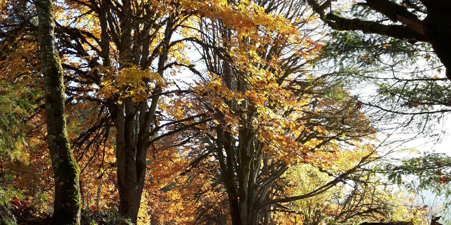 Fall hiking tour