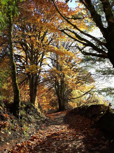 Fall hikes