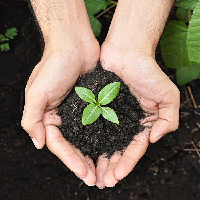 Hands holding young plant with soil.jpg