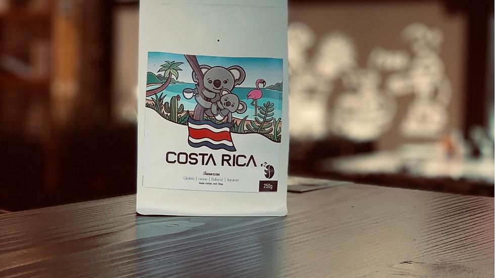 Koala Coffee-Costa Rica Tarazzu