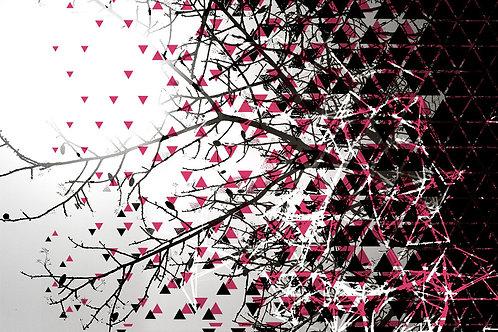 עצים עם משולשים שחור-לבן -אדום