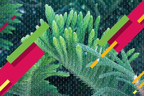 הדפס צמח ירוק עם נקודות ברקע ומלבנים בגווני ירוק-צהוב-אדמדם