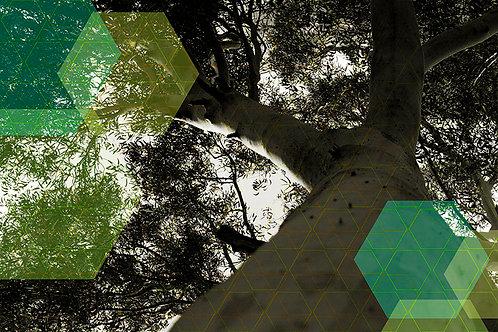 צמרת עץ ומשושים בגווני צהוב-ירוק-טורקיז