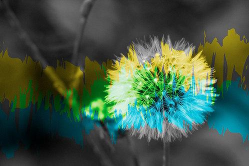 פרח שחור לבן עם גווני צהוב-ירוק-כחול