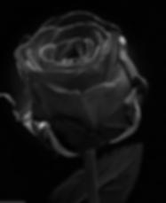 スクリーンショット 2020-01-12 17.56.23.png