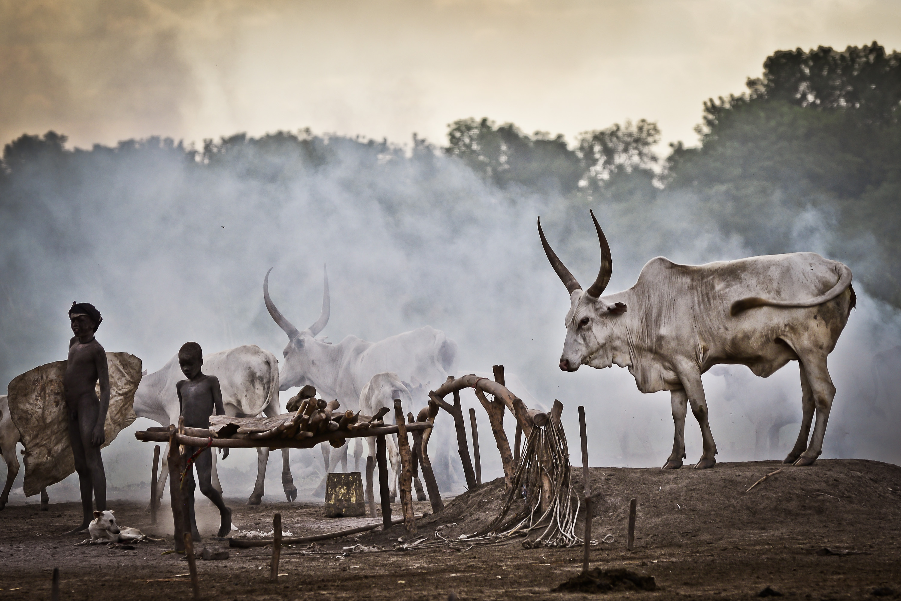 Mundari cattle camp, South Sudan