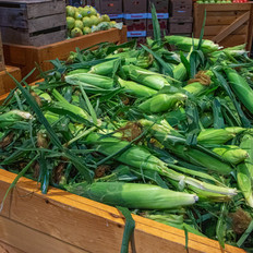 Fresh Sweet White Corn From Our Fields!