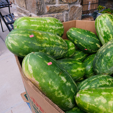 Our Melons!
