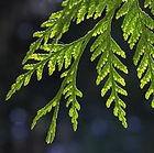 Cedar Shingles, Cedar Shakes, Timber Shingles, Western Red Cedar, Cedar Roof, Cedar Cladding, Cedar, Bali Hut