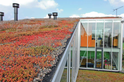TPO Green Roof - Ardex