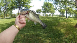 Kevin Fish 3