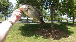 Kevin Fish 4