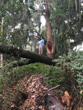 Trees Fall Apart