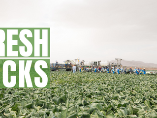Fresh Picks: A Day in Harvest Season Food Safety