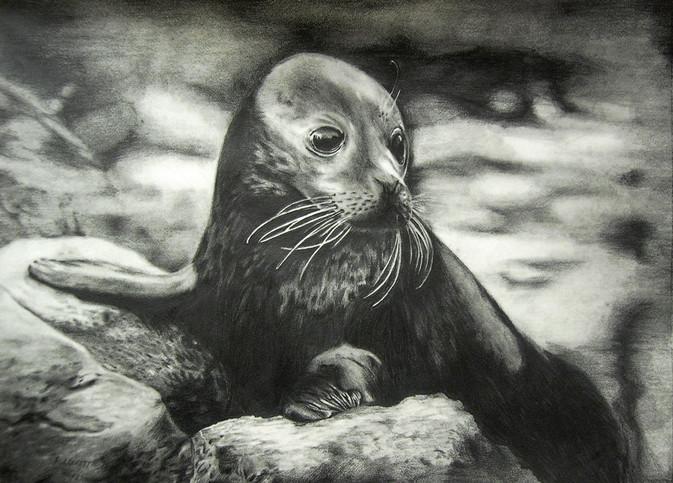 Seal-2012-12-20---PICT0129-ff-final-1.2.