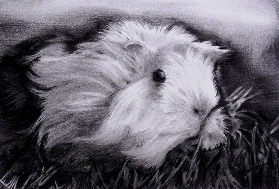 Weebo-Gunie-Pig-2012-12-24-1.2-web.jpg