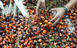 GREEN ACTIVIST SEES RED OVER CALL FOR MORE PALM OIL USE