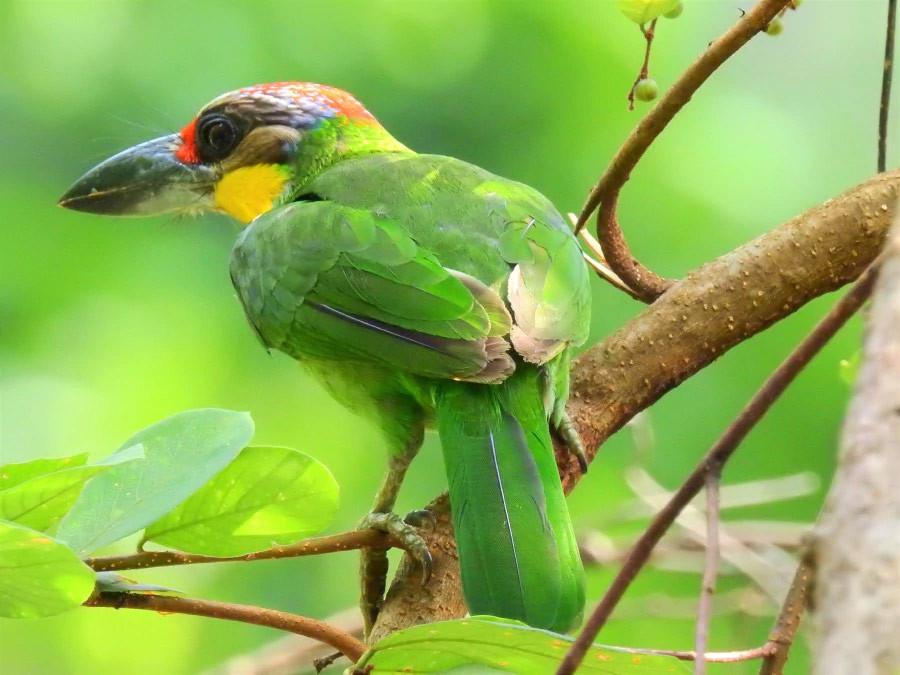 Birdman from Oregon