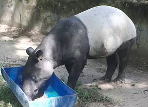 WORLD TAPIR DAY WITH WATSONS