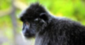 Trekking Sumatra.jpg