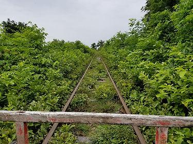tren de bambú.jpg