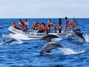 Pigeon island National Park Dolphins.jpg