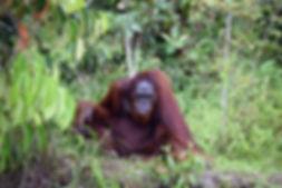 Borneo.jpeg