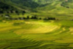 terraces-3683770_1280.jpg