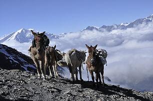 donkey-4014039_1280.jpg