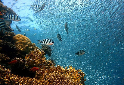 Coral-Reef-Pigeon-Island-Marine-National