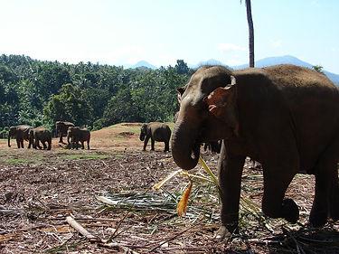 elephant-2734050_1280.jpg