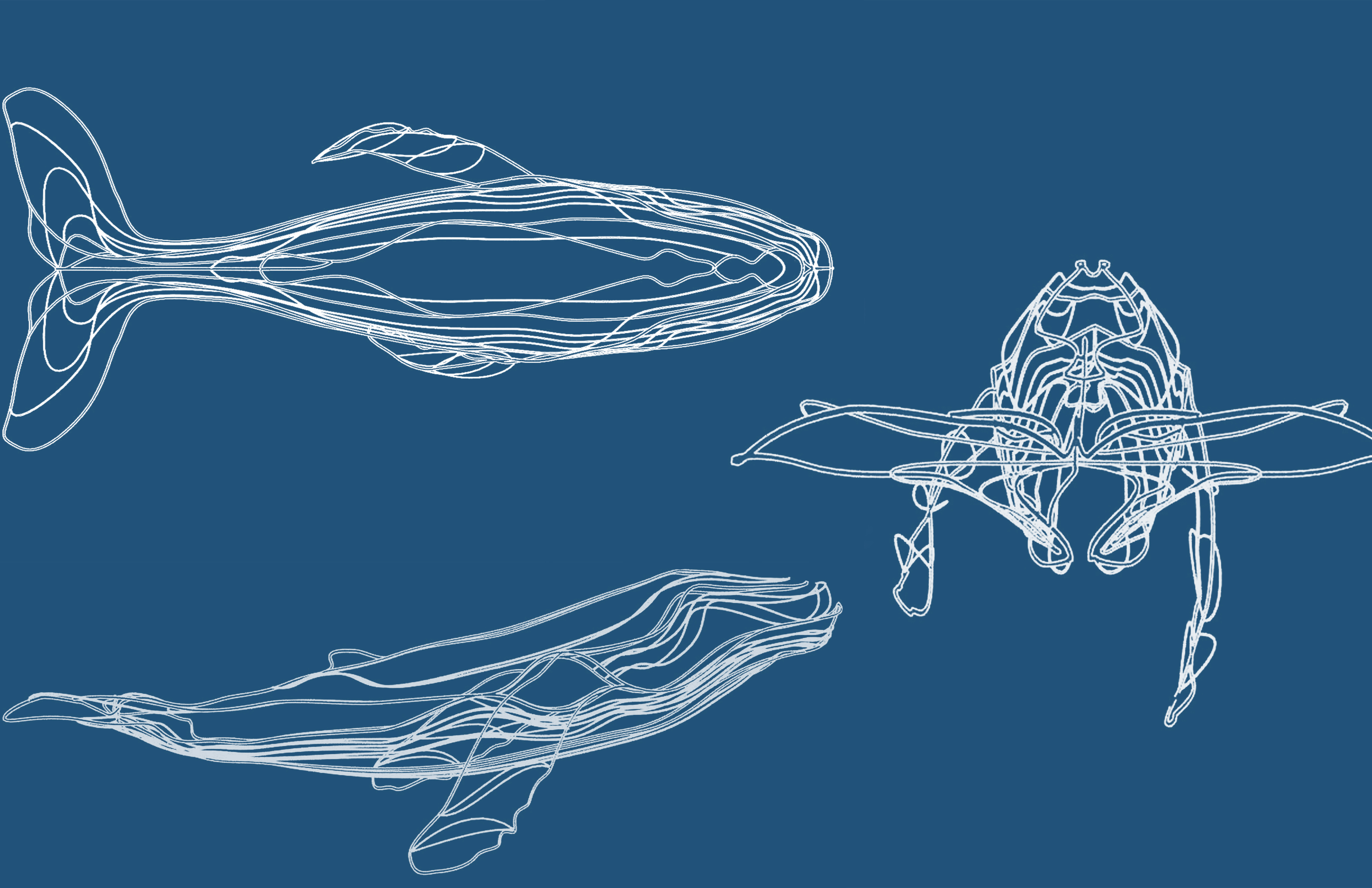 Whale Sculpture Concept Elevations 2017