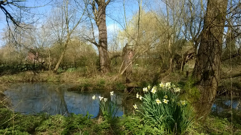 Pond Netherwood