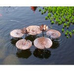 waterlily-150x150.jpg