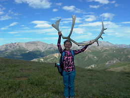 Caribou antler in Denali, Alaska. Denali National Park hiking tours