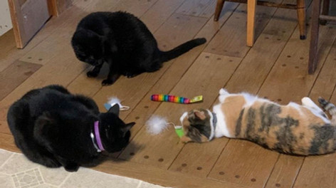 Matthew, Reuben and Callie enjoy a bit of catnip at the Rowe home.