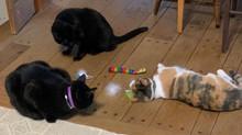 Matthew, Reuben and Callie enjoy a bit of catnip at the Rowe home.