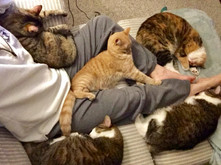 The Shaffer family cuddle puddle: Bean, Ella, Pumpkin, Tweak, Butters and Wendy.