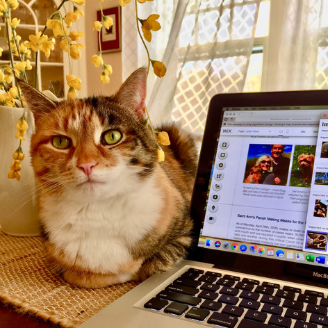 Pumpkin helps Wendy Shaffer update the Saint Ann's website.