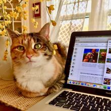 Pumpkin helps Wendy Shaffer update the Saint Ann's website.