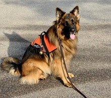 Blitz and Beth Sullivan are essential workers as they work as a team on Search and Rescue Recovery.