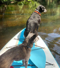 Ember and Zoey paddleboarding in Hamburg Cove.
