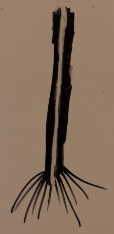 stem split.jpg