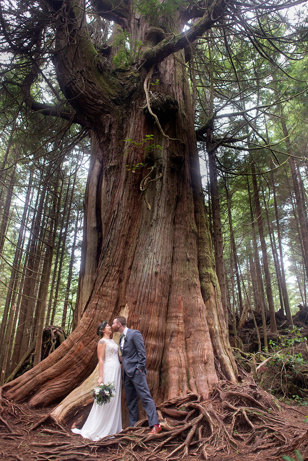 Bride and groom standing next to ancient cedar on Schooner Cove Trail at their Tofino wedding. Photographed by Kaitlyn Shea