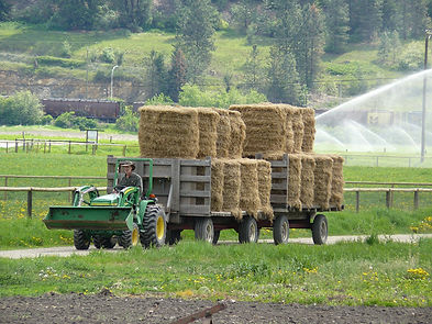 hay and silage in BC