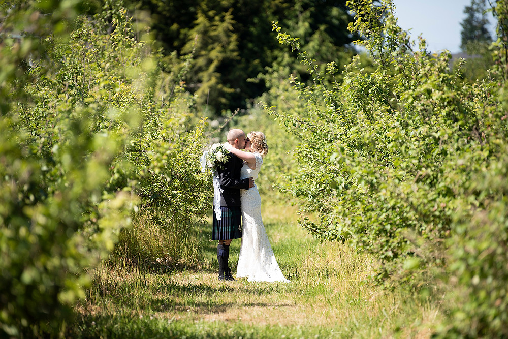 Couple shares a kiss in the orchard at Sea Cider in Victoria. Photographed by Vancouver Island photographer Kaitlyn Shea.