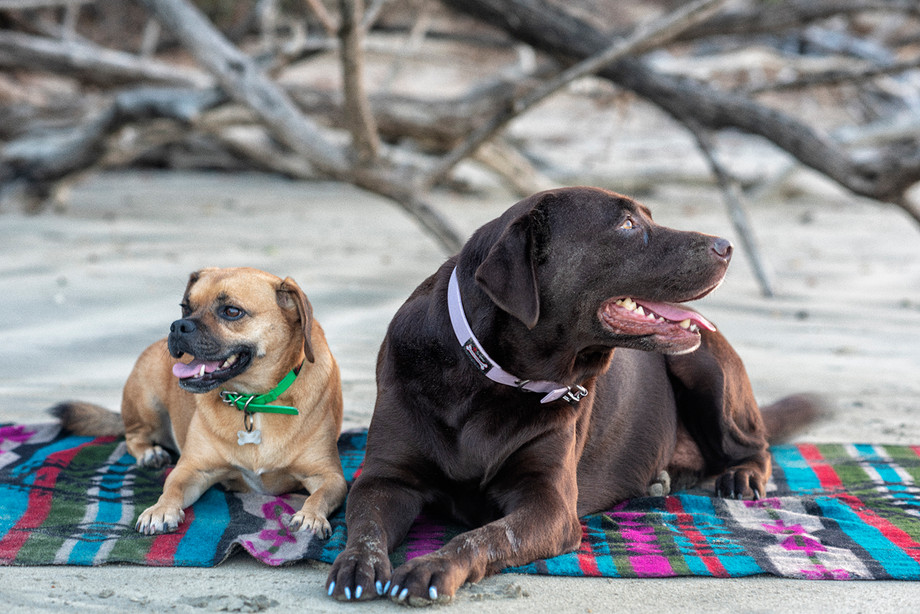 Your Dog-Friendly Tofino Vacation